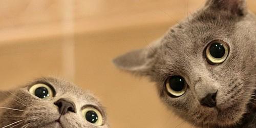 Komplex védelem-kedvezményes csomagok macskáknak