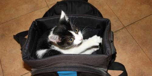 A macskák betegségei - Panleukopénia