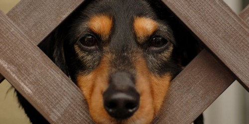 Kullancsok által terjesztett betegségek kutyákban