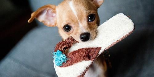 Oltás és mikrochip akció kutyáknak